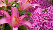 Flowers and Gardens HQ wallpapers Collection 1 E5f207108223184